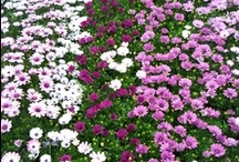 WOODLARK PLANTS LOOKING GOOD 01/06/13 / Plants that are looking good this week (01/06/13)
