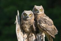Owls - photos