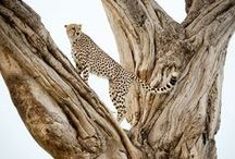 Kenya wildlife safaris / The only way to get so close to the beasts. Soin Africa Safaris