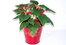 CHRISTMAS BASKETS 2013 / Christmas Basket Catalogue - Varieties