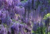 View - Garden-Flower