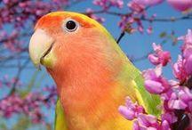 Animals - Birds