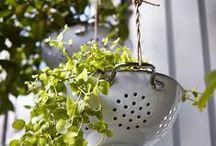 Domáce pestovanie / Aj na malom balkóne môžete vypestovať chutné paradajky či voňavé bylinky.