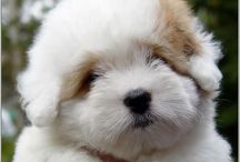Canine Cuteness