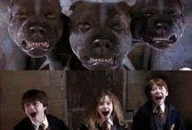 Harry Potter  / by Mary Baker