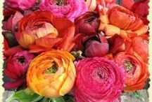 Cutting Garden, Plants + Floral Arrangements / by Paige Ward