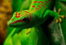 Reptiles / by Dan Nesbit