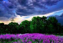 Inspirational Nature