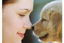animal pet 애완동물 / pet 애완동물