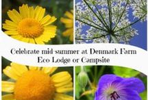 summer solstice / mid summer's day: a time to celebrate, reconnect with the earth and share with friends. Stay at Denmark Farm Eco Campsite or Eco Lodge this summer solstice.