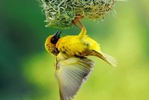 Patrimônios da humanidade! / Apresentar algumas espécies,suas belezas,encantos e importancias como patrimonios naturais.