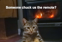 Funny animals / Gotta love these