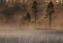 Kaamanen,Inari / #nature #kaamanen #inari