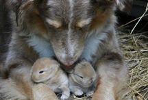 Adelynns animals / Cute stuff / by Blake Kirby