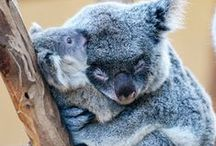 Love Animals / Hugs & Kisses. Love is all you need