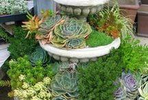 Para mis plantas