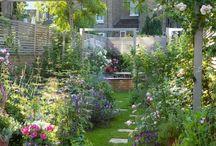 . garden .