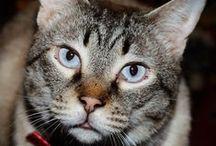 Oleg Sissi Mitu / My tomcat is ''special''.