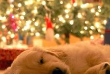 Jeg gleder meg til jul!