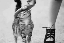 ^THE CAT'S MEOW^ / I'll be the old lady with the cats.....pretty much. / by Raquel Wells