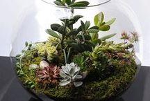 Terária, rastliny a exteriér