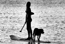 Stand Up Paddle / Stand Up Paddle boarding