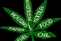 Legalize It  / Ganja Facts ect. / by Cassandra Marie