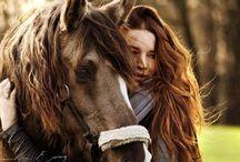 Horses / Beautiful equine
