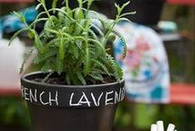 Simple DIY Herb Pots / Simple DIY Herb Pots For Indoors And Outdoors