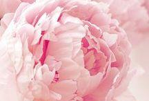 Flowers roses photos♫ ♪ ♥●•٠·˙ ☯ / beauty