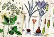 Les plantes qui soignent / Petit index des plantes médicinales… Mémo des plantes qui soignent.