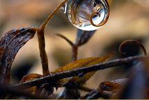 Drops / Drops photo