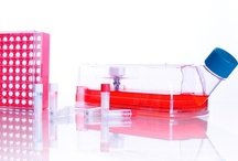 WHEATON Cell Culture / Qaulity is paramount in our manufacturing and performance is principal in the design. From sample preparation to storage and adherent cell culture suspension culture, WHEATON undrstands the life sciences and their importance to all of us