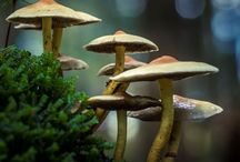 FunGuS Forest