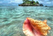 Seaside shells / She sells sea shells on the sea shore, the shells that she sells are sea shells for sure!!