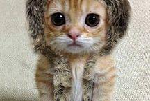 Animals / So cute...