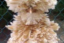 chickens / Alles wat over kippen gaat