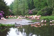 Birds / Allerlei vogels
