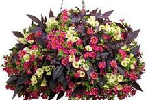 Container Flower Ideas