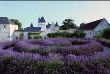 Eeverything lavender