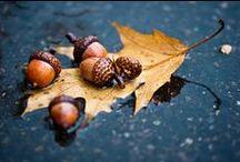 Sacred Oak Leaves and Acorns