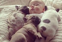 Pugs / It has adorble Pugs!!!!!!!