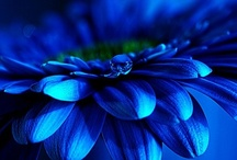 Blue Bliss / ..it is filled with space!