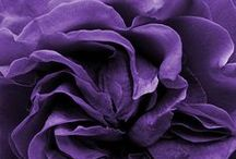 Perfect Purple / Purple is the colour for adventurous hearts with spiritual leanings and a flair for Drama.
