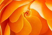 Orange Oasis / Where Red is the Fire, it is Orange that welcomes us to it...
