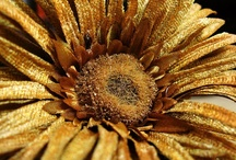 Glowing Gold / Gold elevates and enlivens as wondrously as the sun illuminates...