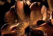 Bohemian Brown / A Down-to-Earth, unpretentious, rich & wholesome colour...