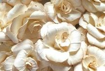Beige Blends / ...a calm, neutral background with a bit of the warmth of brown and the crisp coolness of white.