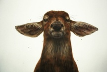 animal / by Harris Wijaya