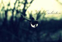 My photography / Staram się fotografować wszystko co mnie otacza